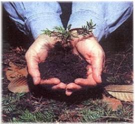 Plant a Memorial Tree