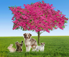 Belspur Oaks Pet Crematory, Inc. Pet Cremation Services ...